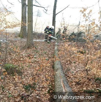 REGION, Boguszów-Gorce: Trzy interwencje boguszowskich strażaków w jeden dzień