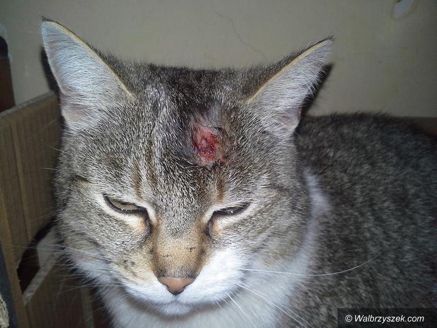 REGION, Boguszów-Gorce: Ktoś strzelał do zwierząt
