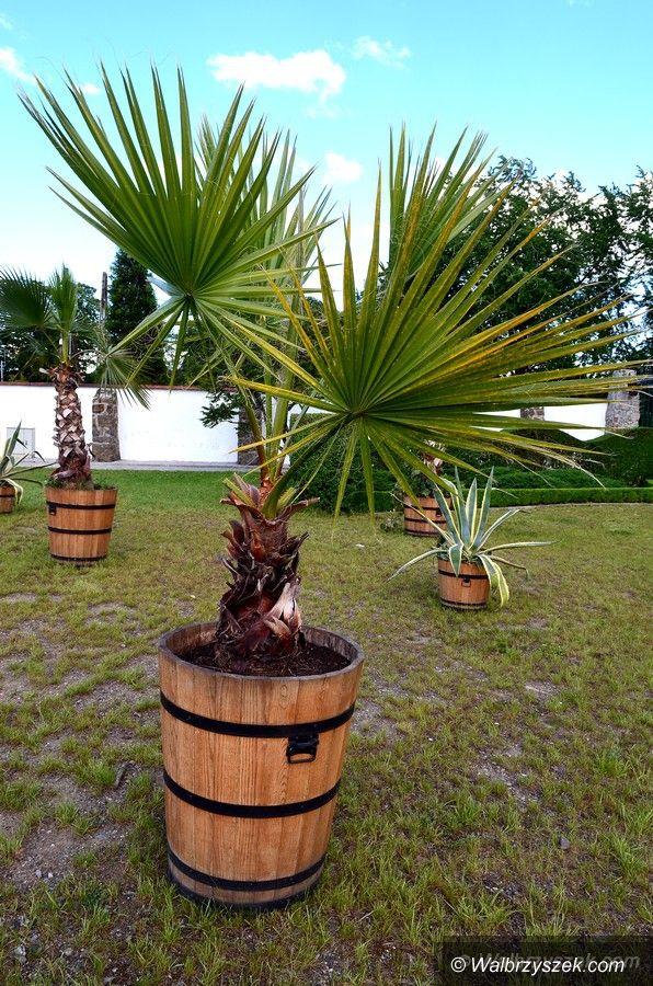 Wałbrzych: Palmy przed Palmiarnią