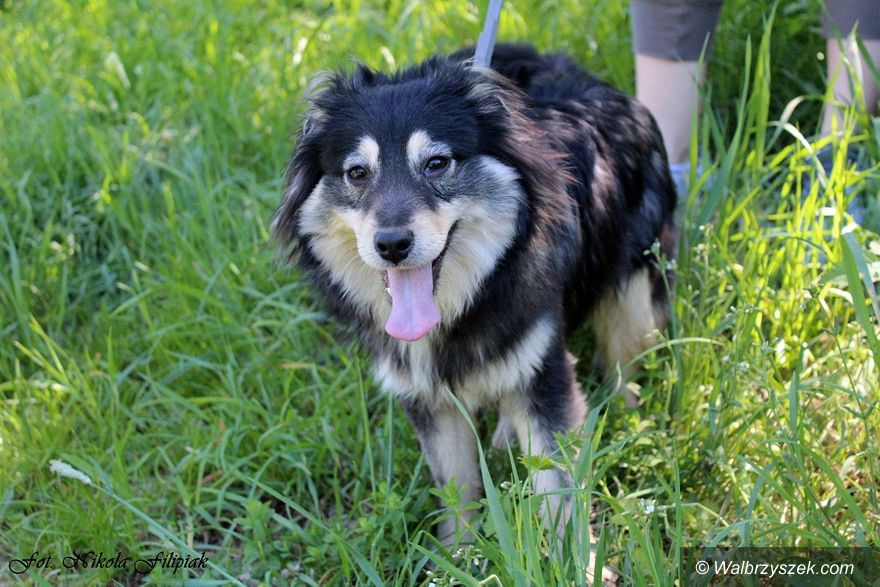 Wałbrzych: Kudłaty, energiczny psiak czeka na adopcję