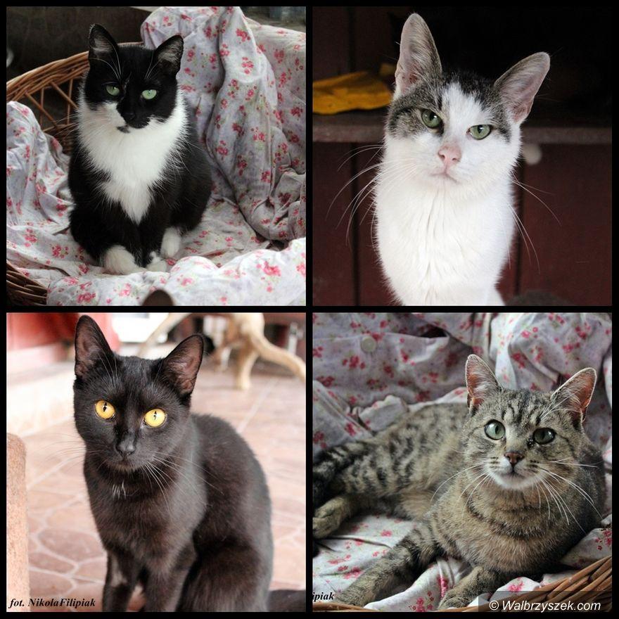 Wałbrzych: Kociaki czekają na lepszą przyszłość