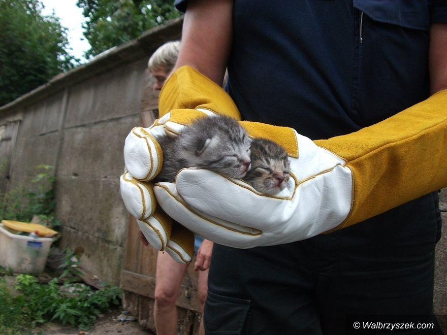 Wałbrzych: Pomogli mieszkańcom i zwierzętom