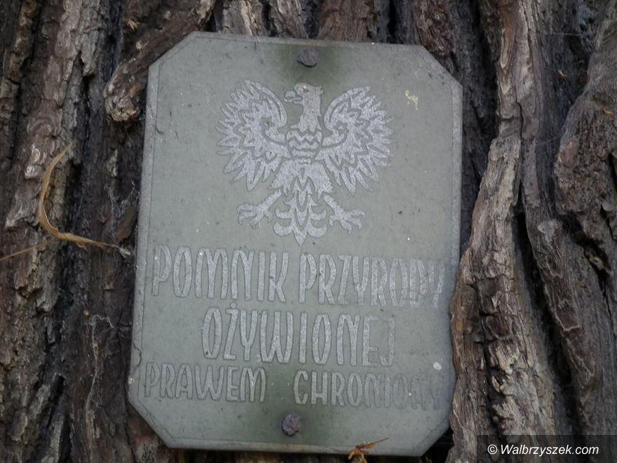 REGION, Unisław Śląski: Zabezpieczą pomnik przyrody