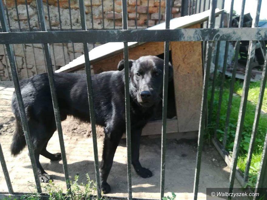 REGION, Świebodzice: Interweniowali w Świebodzicach – odebrali psa