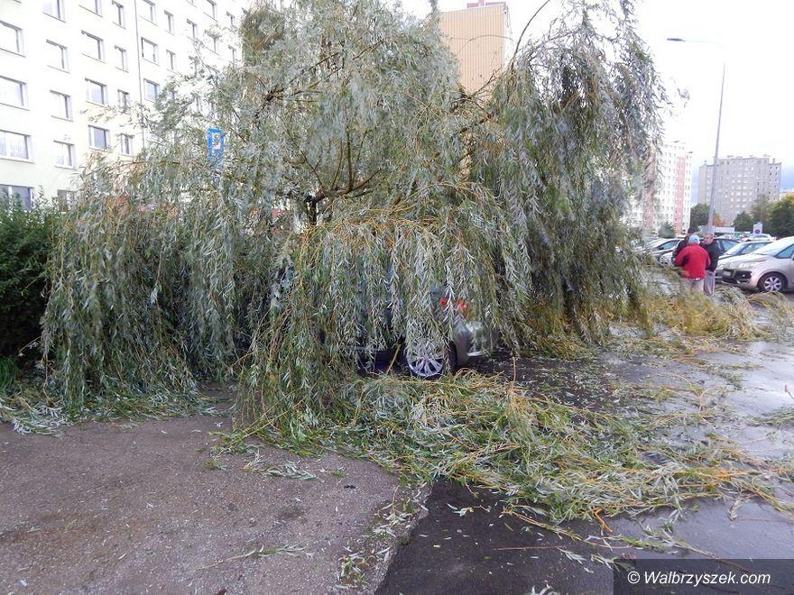 Wałbrzych/REGION: Wichura łamała drzewa jak zapałki