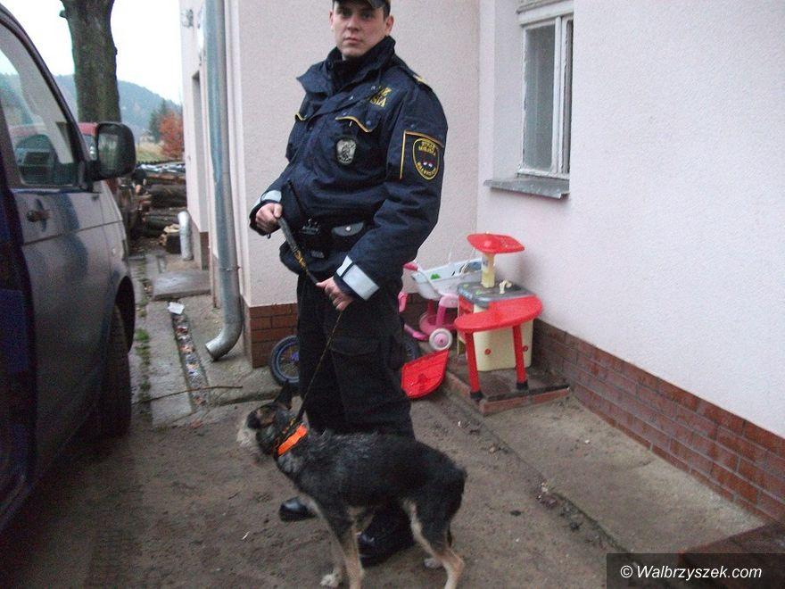 Wałbrzych: Psie życie uratowane
