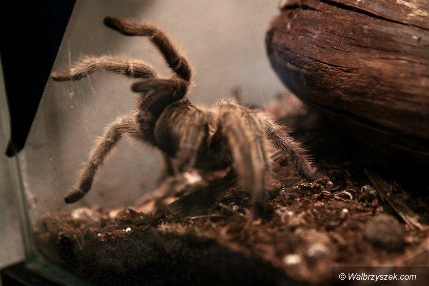Wałbrzych: Świat pajęczaków