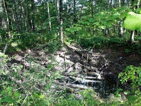 Wałbrzych/REGION: Chcą wstępu do lasu