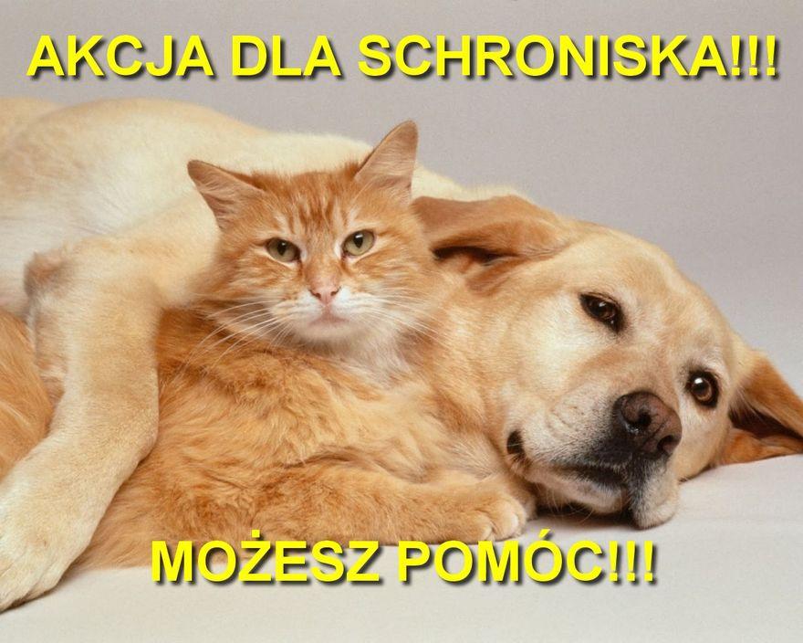 Wałbrzych/powiat wałbrzyski: Akcja dla schroniska