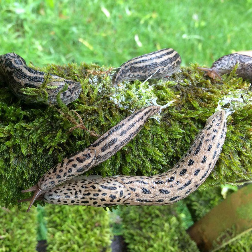 Wałbrzych: Dorodny ślimak
