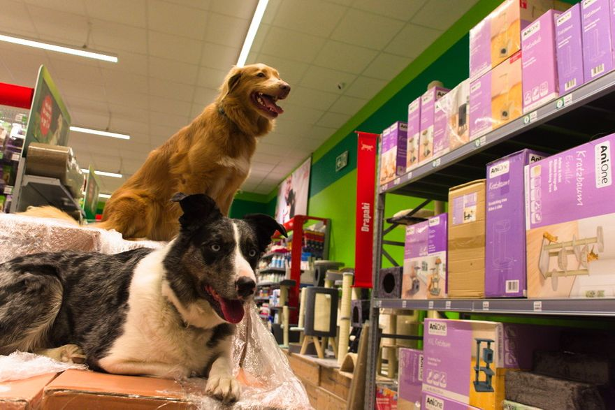 Wałbrzych: Popularny sklep dla zwierząt Maxi Zoo już w Wałbrzychu!