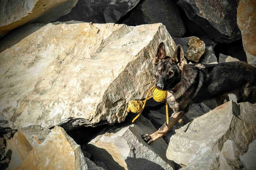 REGION: Dla psów ratowniczych