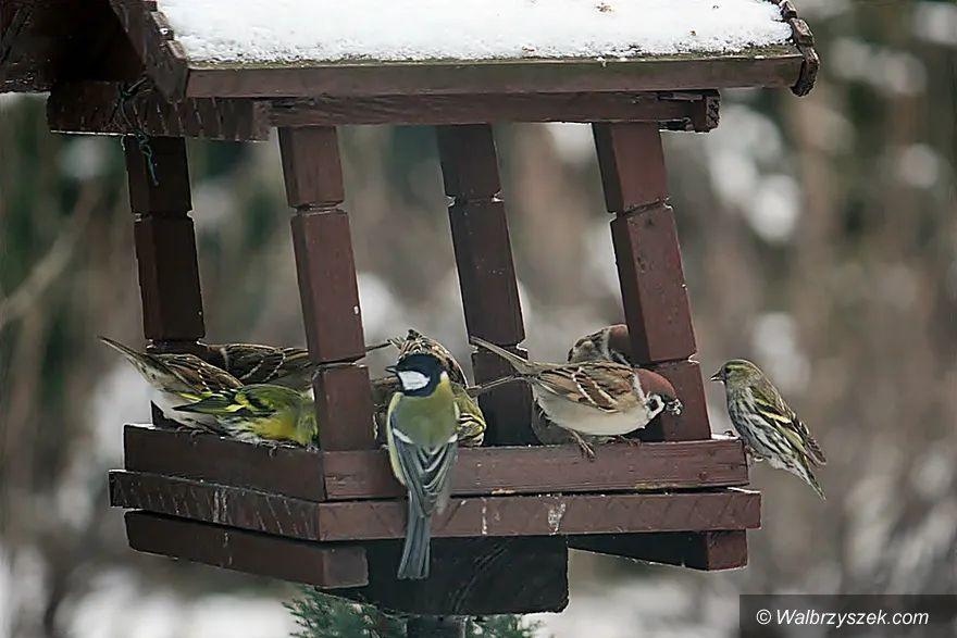 Wałbrzych/REGION: Zimowe dokarmianie ptaków
