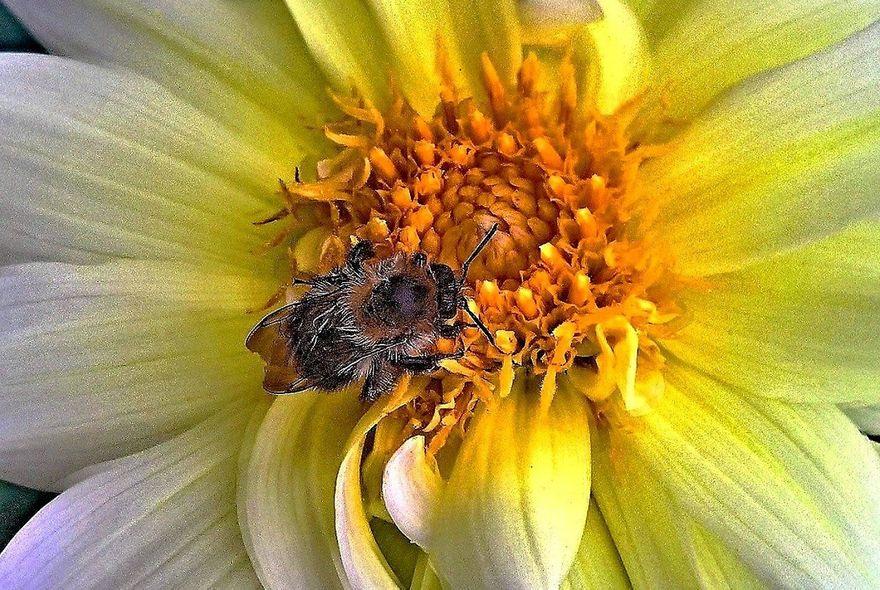 Wałbrzych/Kraj: Pyłek pszczeli – czy to prawdziwy superfood?