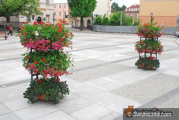 Świdnica: Plac Jana Pawła II ukwiecony