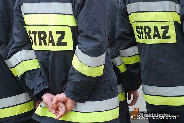 powiat świdnicki: Straż ratuje psiaki
