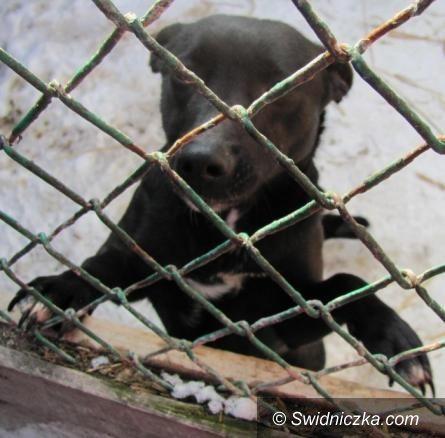 Świdnica/Dobrocin: Właściciel schroniska, do którego trafiały świdnickie psy, oskarżony o znęcanie się nad zwierzętami