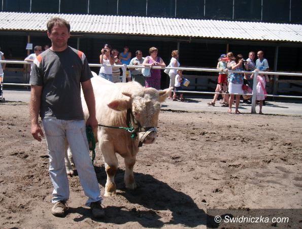 Marcinowiczki/Opole: Buhaj z Marcinowiczek jednym z najlepszych w Polsce
