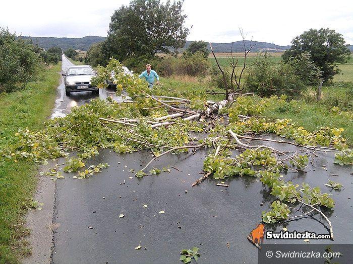 Witoszów Dolny/Bystrzyca Dolna: Chcesz przejechać? Posprzątaj sobie drogę