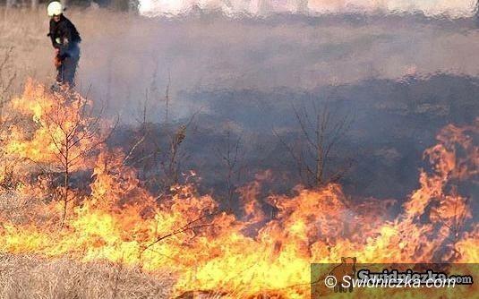 Świdnica: Wiosna idzie, płoną trawy, a strażacy apelują o rozsądek