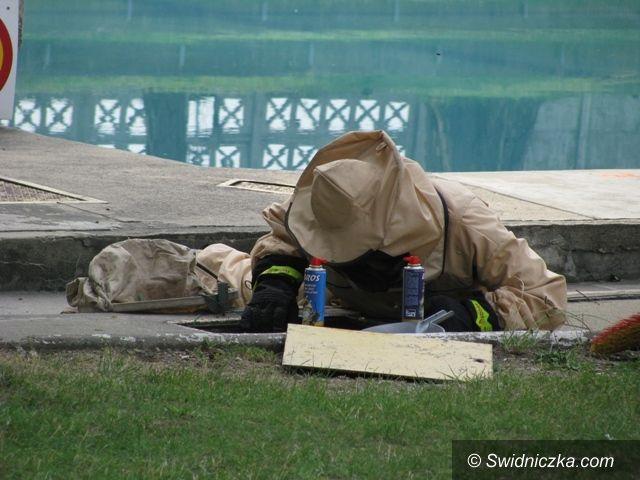 Świdnica: Osy zaatakowały świdnicki basen