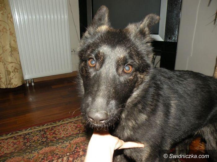 Region: Bezdomny psiak – Zuzia szuka pilnie domu!