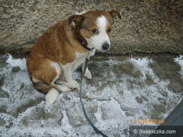 Region: Bezduszni ludzie znów wyrzucili psy, szukamy nowych opiekunów