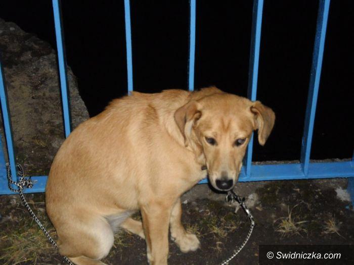 Świdnica: Kolejny pies porzucony przez swojego bezmyślnego właściciela