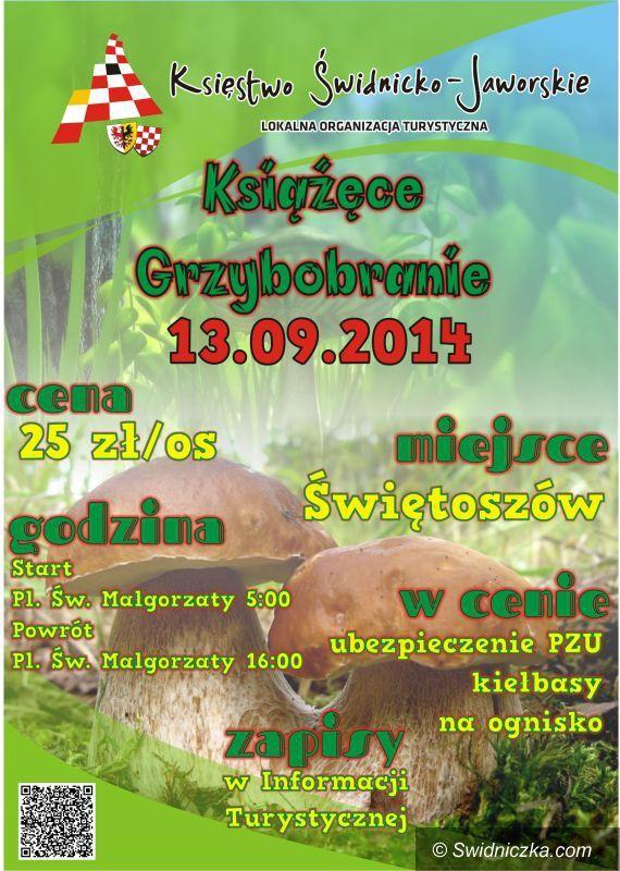 Świdnica: II Książęce Grzybobranie Księstwa Świdnicko–Jaworskiego