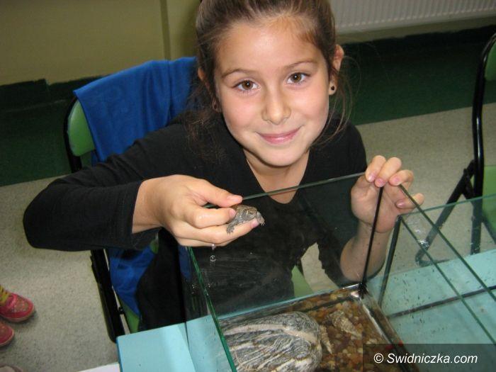 Świdnica: Wystawa zwierząt hodowanych w domach