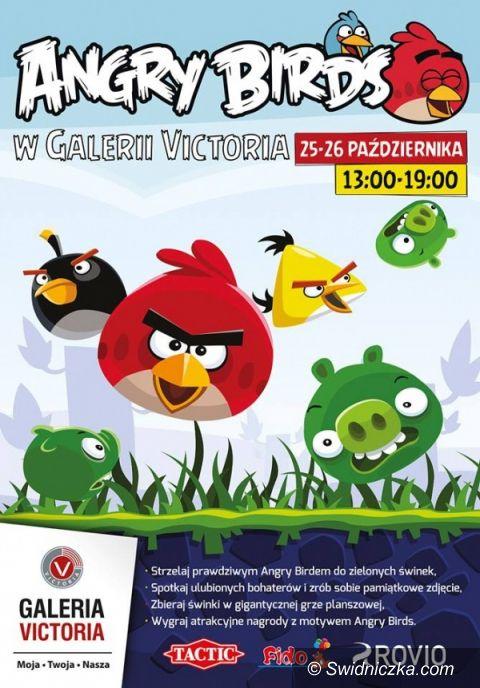 Wałbrzych: Angry Birds w Galerii Victoria