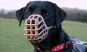 Dolny Śląsk: Masz psa lub napotkałeś na swojej drodze agresywnego czworonoga – o czym powinieneś wiedzieć