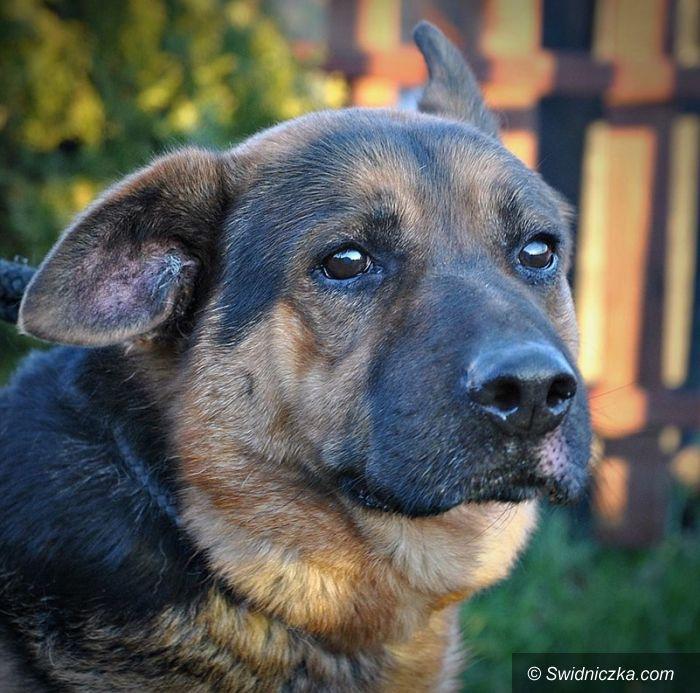 Świebodzice: Pomóżmy zwierzakom szukającym domu