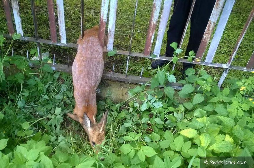 Świdnica: Na pomoc zwierzęciu