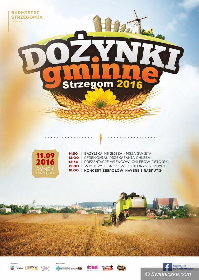 Strzegom: Zapraszamy na dożynki w gminie Strzegom