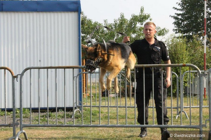 Świebodzice: Psy tropiące przeczesały lotnisko
