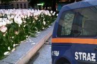 Świdnica: Wyładował złość na tulipanach