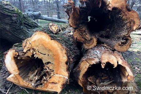 Świdnica: Zmiany w przepisach dotyczących wycinki drzew