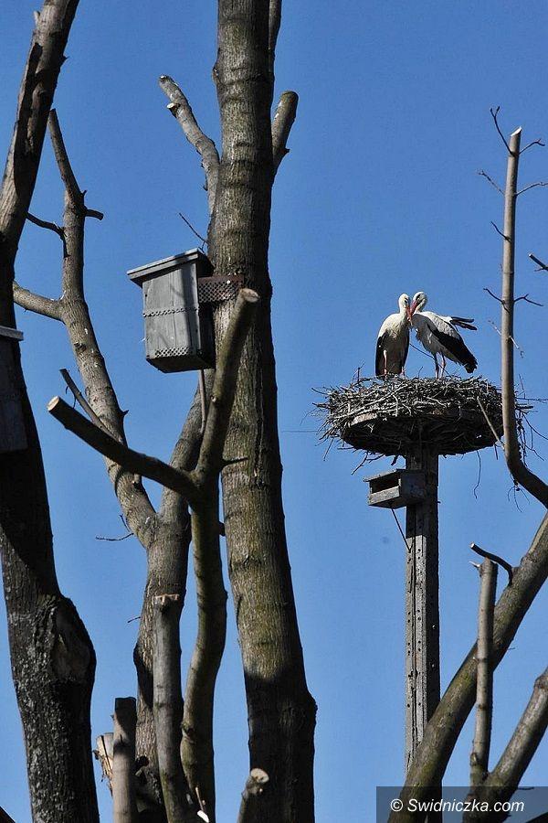 Boleścin: Boleścińskie bociany