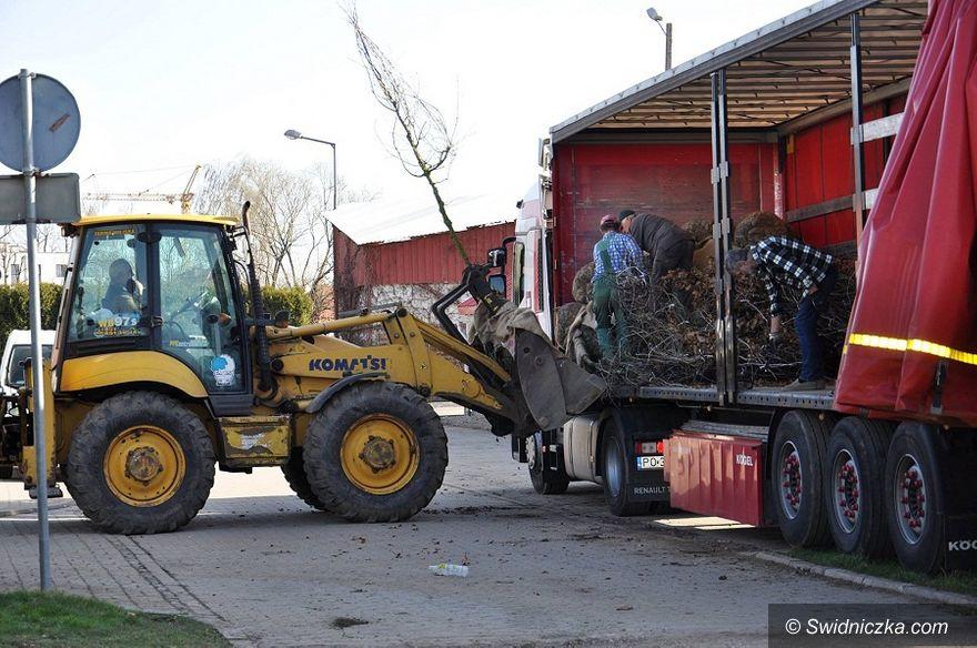 Świdnica: Rozpoczęły się nasadzenia w świdnickim Parku Sikorskiego