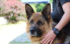 Świdnica: Kynologiczne zawody psów służbowych dolnośląskiej Policji