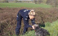Słotwina: W wyniku niecodziennej interwencji policjantów potrąconemu zwierzęciu zapewniono fachową pomoc