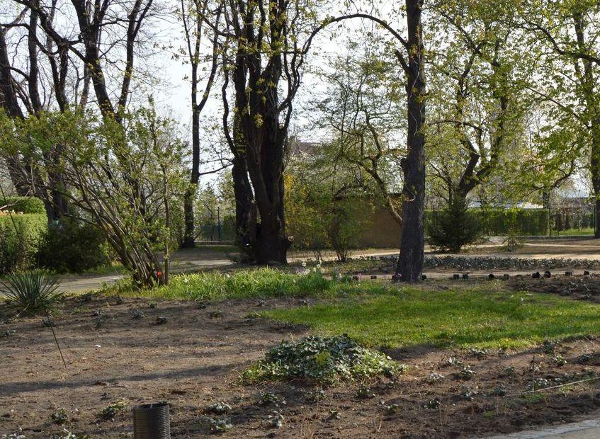 Świebodzice: Park pięknieje